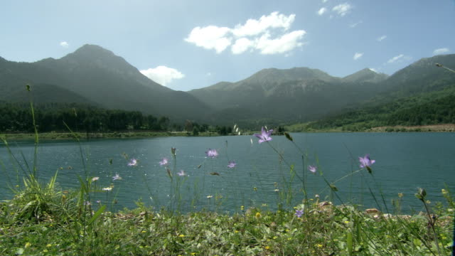ws lake feneos surrounded with mountains, wild flowers in foreground, helmos, ahaia, greece - alm stock-videos und b-roll-filmmaterial
