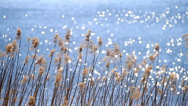 lake grass - satoyama scenery stock videos & royalty-free footage