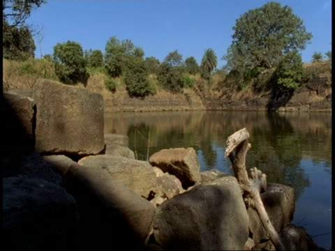 wa lake in jungle, bandhavgarh national park, india - national icon stock videos & royalty-free footage