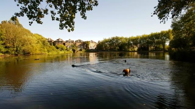 ロンドンのハムステッド ・ ヒースの湖 - ロンドン区点の映像素材/bロール
