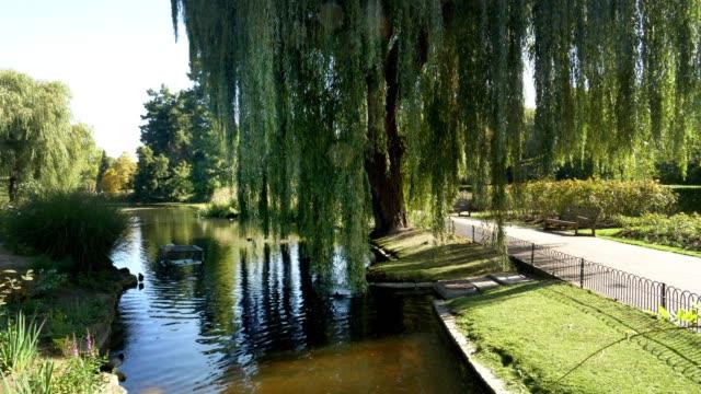 vídeos de stock, filmes e b-roll de lago na seção do jardim da rainha mary do parque de londres regent - parque regents