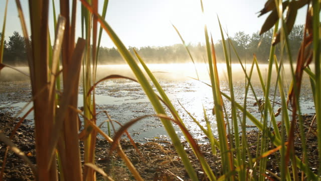 hd: lake in morning - bog stock videos & royalty-free footage
