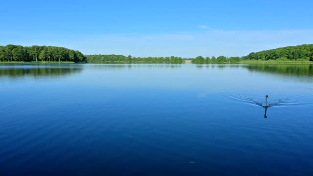 lake in summer, etang du stock, langatte, sarrebourg, moselle, france - mute swan stock videos & royalty-free footage