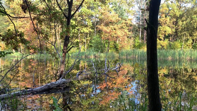 lake in the forest - eastern european culture stock videos & royalty-free footage