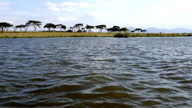 lake naivasha from the boat - acacia tree stock videos & royalty-free footage