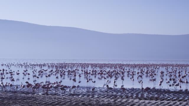 WS Lake Nakuru with Flamingo flock
