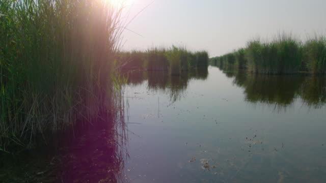vídeos de stock e filmes b-roll de lake neusiedl close up lake views - grupo pequeno de animais