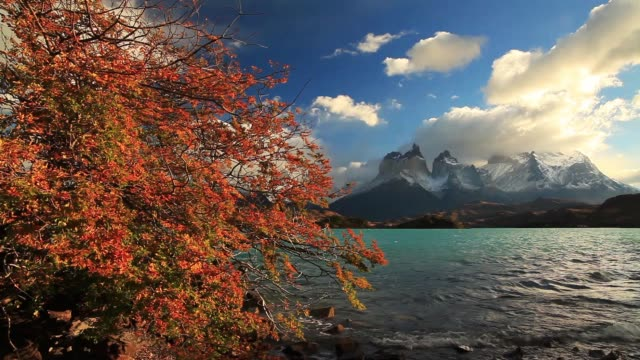 lake pehoe at dawn. torres del paine, chile - patagonia chile stock videos and b-roll footage