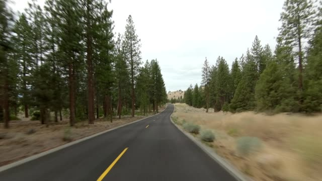 vídeos de stock e filmes b-roll de lake shastina xiii synced series front view driving process plate - abeto