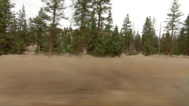 vídeos de stock e filmes b-roll de lake shastina xiii synced series right view driving process plate - abeto