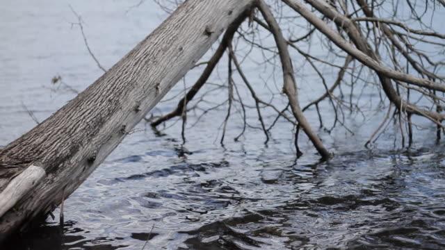 stockvideo's en b-roll-footage met lake shore - twijg