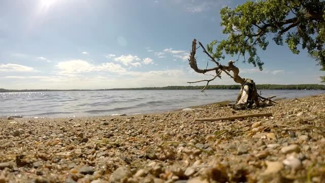 stockvideo's en b-roll-footage met lake shore - drijfhout