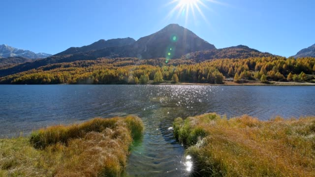 lake silsersee with colorful larch trees with sun in autumn, lake silsersee, sils im engadin, engadin, grisons, switzerland, european alps - viewpoint stock videos & royalty-free footage