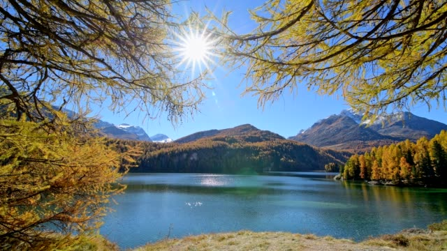 lake silsersee with larch trees and sun in autumn, sils im engadin, engadin, grisons, switzerland, european alps - alps stock videos and b-roll footage