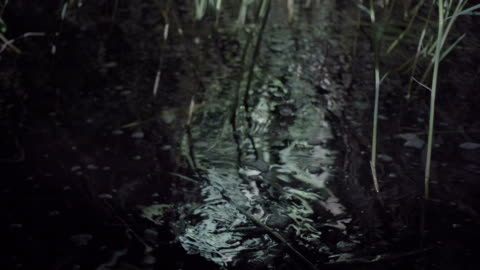 vídeos de stock, filmes e b-roll de superfície do lago. juncos jovens perto da água - caniço