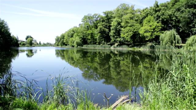 vídeos de stock, filmes e b-roll de lago cercado por floresta. o twigs de willow para a água. - estampa de folha