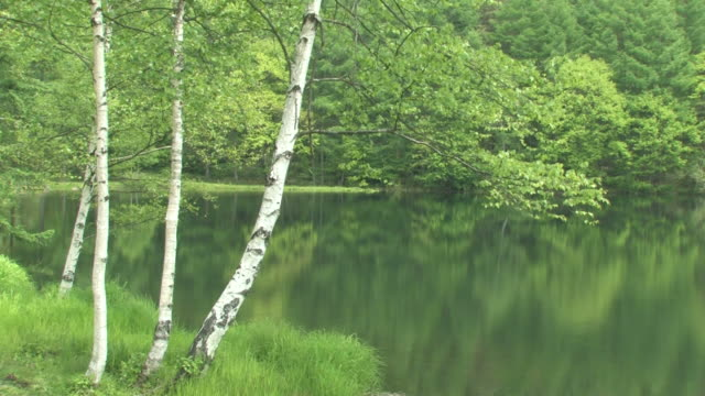 lake surrounded by forest - fukuoka prefecture stock videos & royalty-free footage