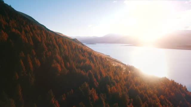 lake tekapo aerial view - pine stock videos & royalty-free footage
