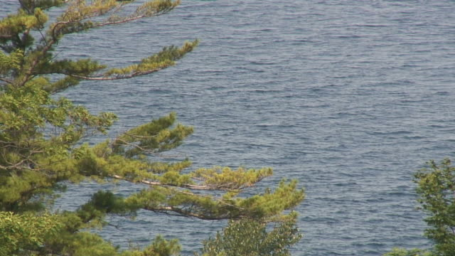 lake through the tree - hd 1080/60i - named wilderness area stock videos & royalty-free footage