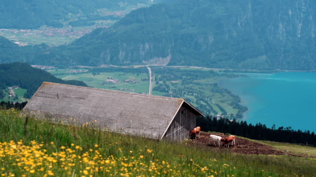 lake thun under jungfrau mountain - lake thun stock videos and b-roll footage