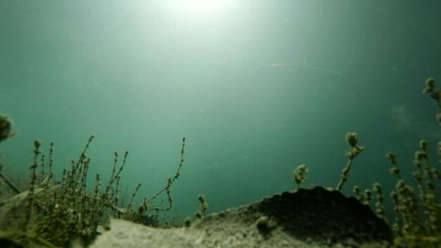 See unter Wasser