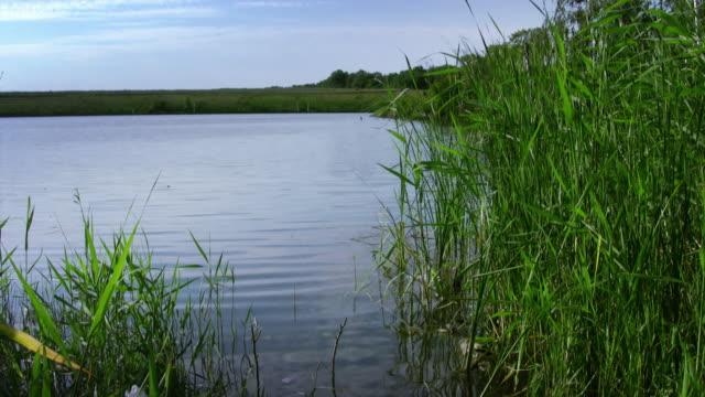 lake - backwater stock videos & royalty-free footage