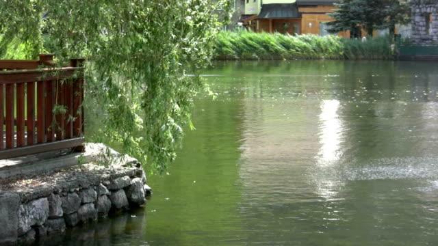 hd: see lake - trauerweide stock-videos und b-roll-filmmaterial