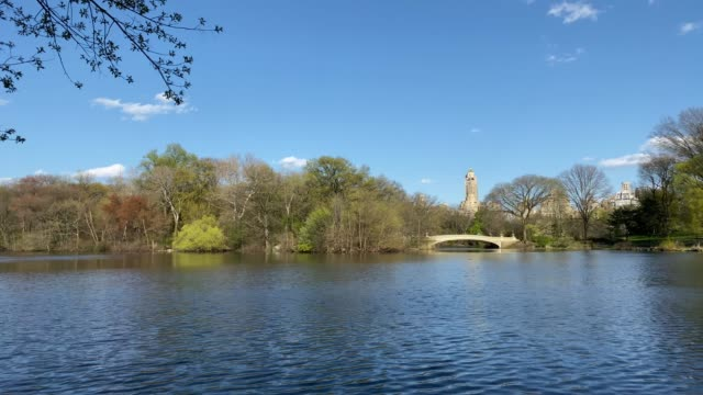 lake view in central park in manhattan - lakeshore stock videos & royalty-free footage