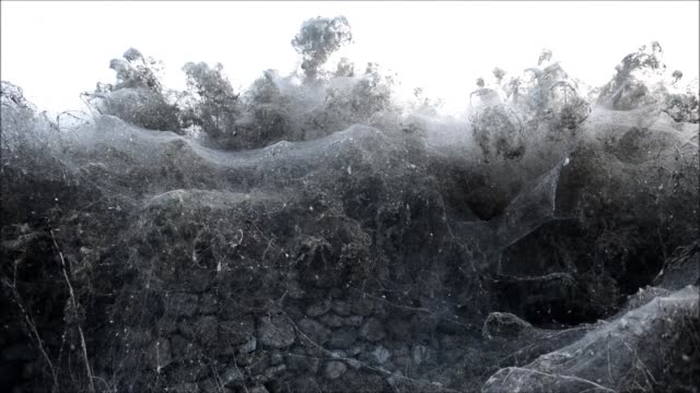 lake vistonida in northern greece has become an arachnophobe's worst nightmare after it was cloaked recently by massive webs spun by hundreds of... - arachnophobia stock videos and b-roll footage