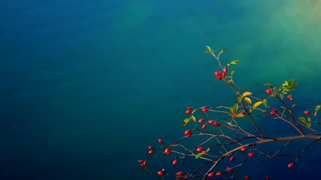 vídeos de stock, filmes e b-roll de lago, água, plantas, natureza - cultura do leste europeu