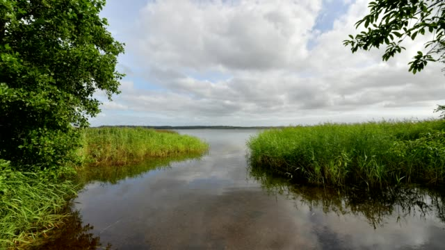lake with reeds in summer, vandet so, thisted, nationalpark thy, north jutland, denmark - reed grass family stock videos & royalty-free footage