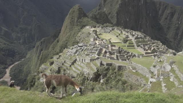 lama / alpaca with machu picchu in the background - マチュピチュ点の映像素材/bロール