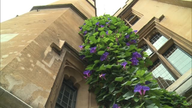 stockvideo's en b-roll-footage met london lambeth ext general views of lambeth palace and gardens including pergola with plants growing up / sundial / dark pink rose / fig plant /... - zonnewijzer