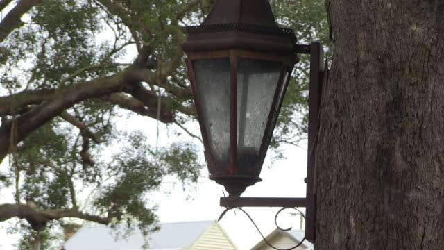 vidéos et rushes de lamp on a tree shot - séquoia géant