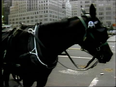 vídeos de stock, filmes e b-roll de lamppost on central park street corner / down to cars, man waiting to cross street / skyscrapers , cloudy sky / horse, hansom cabs / horse carriages... - centro de manhattan