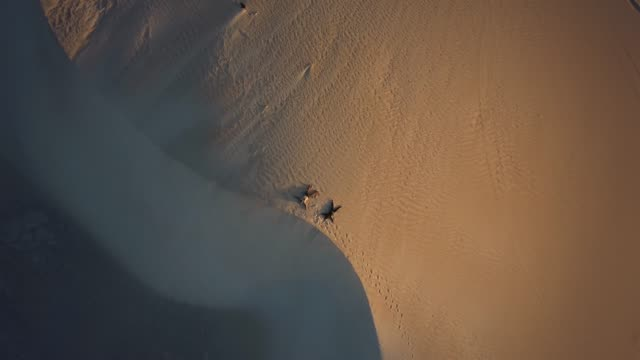 lancelin western australia - desert stock videos & royalty-free footage