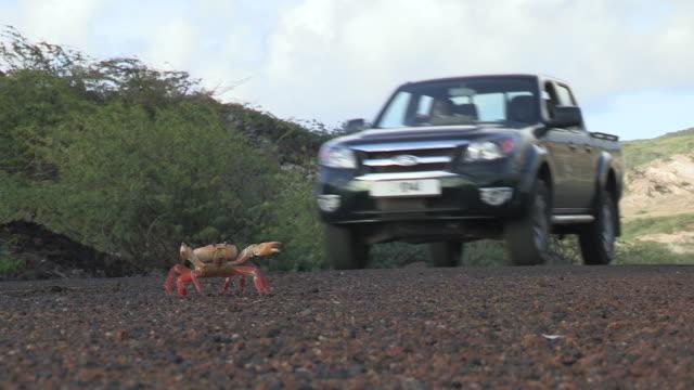 stockvideo's en b-roll-footage met land crab avoids car on road, ascension island - vermijden
