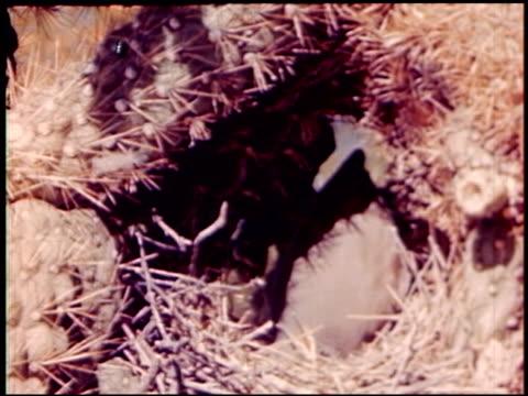 land of geronimo - 11 of 31 - この撮影のクリップをもっと見る 2206点の映像素材/bロール