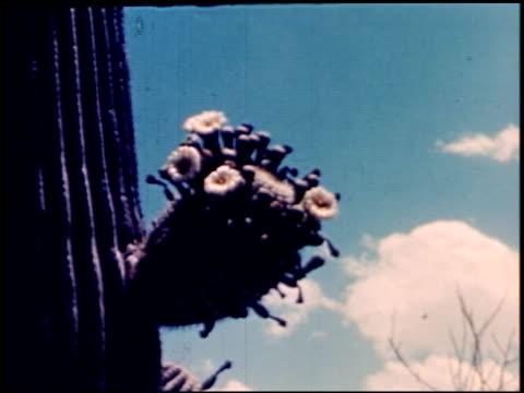 land of geronimo - 12 of 31 - この撮影のクリップをもっと見る 2206点の映像素材/bロール
