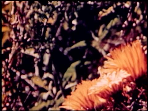 land of geronimo - 13 of 31 - この撮影のクリップをもっと見る 2206点の映像素材/bロール