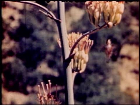 land of geronimo - 15 of 31 - この撮影のクリップをもっと見る 2206点の映像素材/bロール