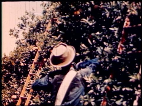 land of geronimo - 22 of 31 - この撮影のクリップをもっと見る 2206点の映像素材/bロール