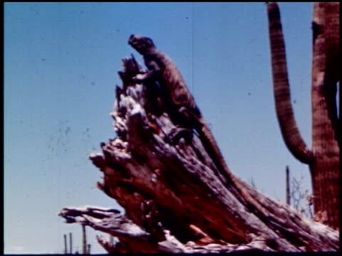 land of geronimo - 4 of 31 - この撮影のクリップをもっと見る 2206点の映像素材/bロール
