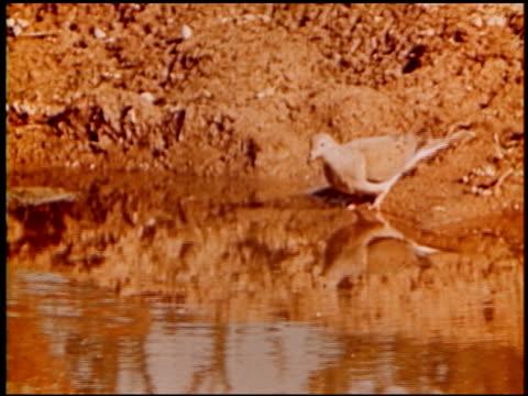 land of geronimo - 6 of 31 - この撮影のクリップをもっと見る 2206点の映像素材/bロール