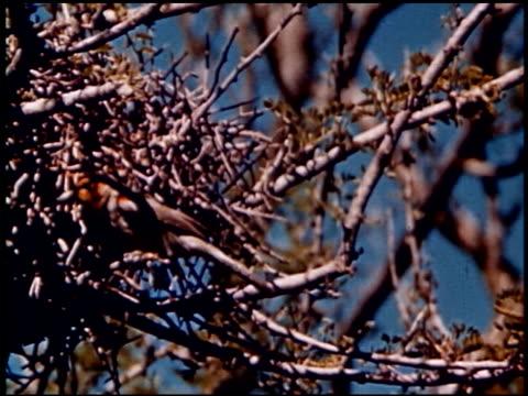 land of geronimo - 7 of 31 - この撮影のクリップをもっと見る 2206点の映像素材/bロール