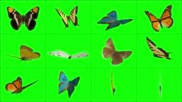 Landed Butterflies