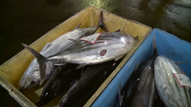 landed skipjack tunas at auction, chiba, japan - auction stock videos & royalty-free footage