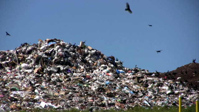 Landfill With Vultures Flying