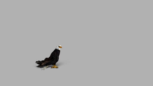 landing eagle with alpha channel (loopable) - white background stock videos & royalty-free footage