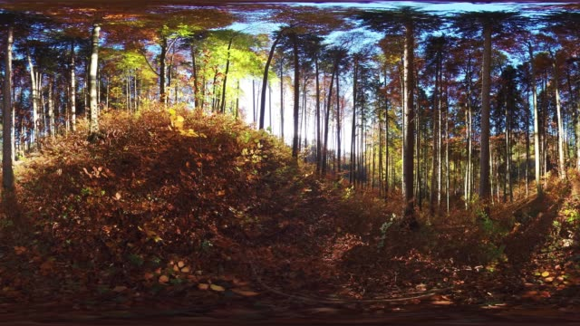 360VR landscape 4k video autumn in hilly forest